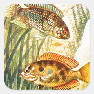Pescados restaurados vintage colcomania cuadrada