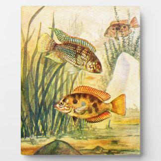 Pescados restaurados vintage placas de plastico