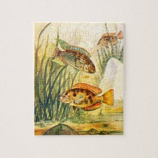 Pescados restaurados vintage puzzle