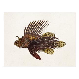 Pescados retros 1905 del león del cabracho del Lio Postal
