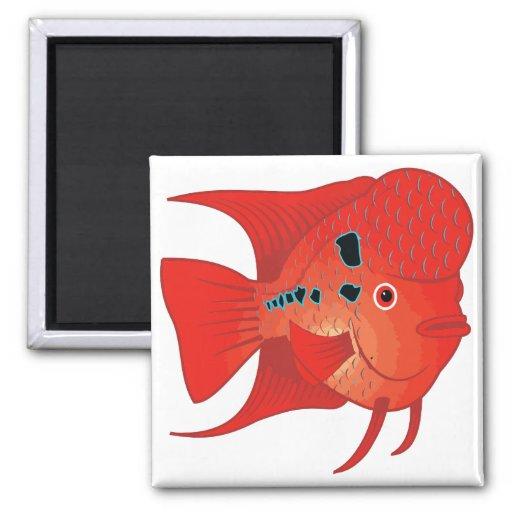 Pescados rojos de Flowerhorn Iman Para Frigorífico