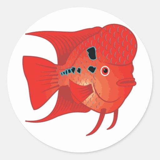 Pescados rojos de Flowerhorn Pegatina Redonda