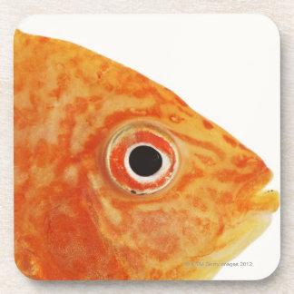 Pescados rojos del diácono posavaso