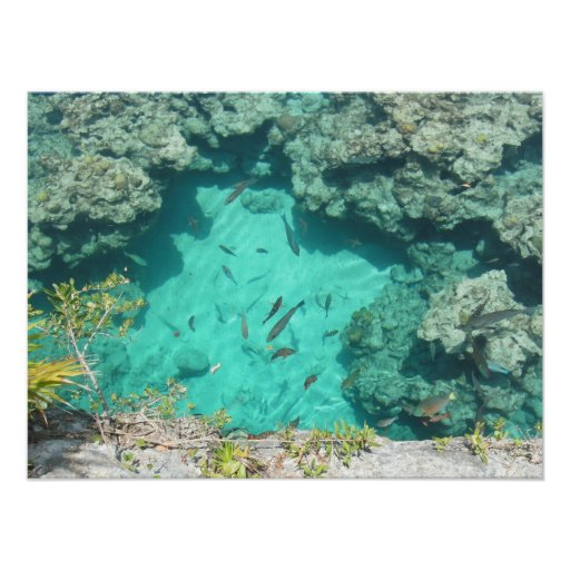 Pescados salvajes cristalinos del filón impresiones