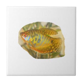 Pescados saturados de oro del acuario de la vista  azulejo cuadrado pequeño