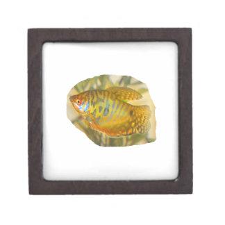 Pescados saturados de oro del acuario de la vista  cajas de joyas de calidad