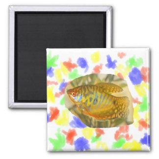 Pescados saturados de oro del acuario de la vista  imán cuadrado