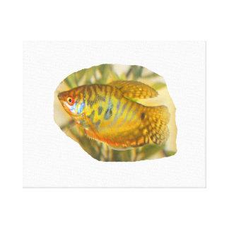 Pescados saturados de oro del acuario de la vista  impresion de lienzo