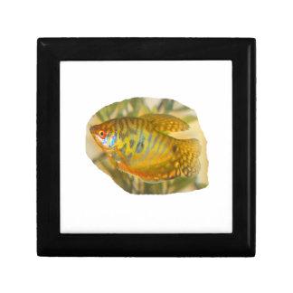 Pescados saturados de oro del acuario de la vista  joyero cuadrado pequeño