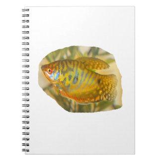 Pescados saturados de oro del acuario de la vista  note book