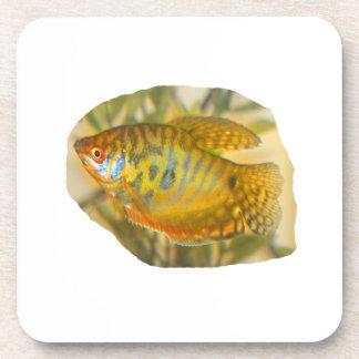 Pescados saturados de oro del acuario de la vista  posavasos de bebidas