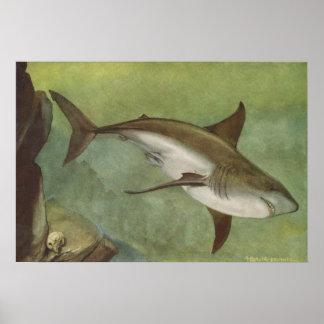 Pescados - tiburón blanco - carcharias del Carchar Impresiones