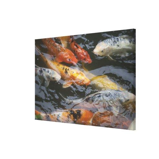 Pescados tímidos impresion en lona