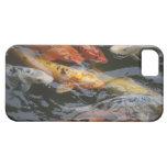Pescados tímidos iPhone 5 carcasas