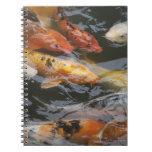 Pescados tímidos libros de apuntes con espiral