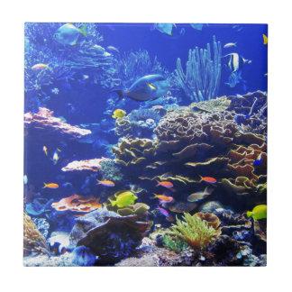 Pescados tropicales azulejo cuadrado pequeño