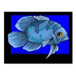 Pescados tropicales azules hermosos de Óscar Tarjetas Postales