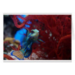 Pescados tropicales azules tarjetón