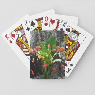 Pescados tropicales barajas de cartas