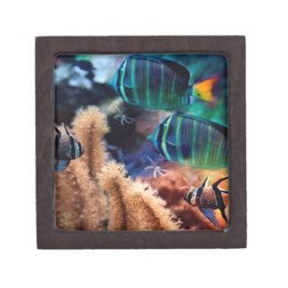 Pescados tropicales caja de joyas de calidad