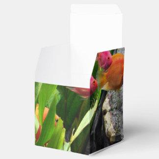 Pescados tropicales cajas para detalles de boda