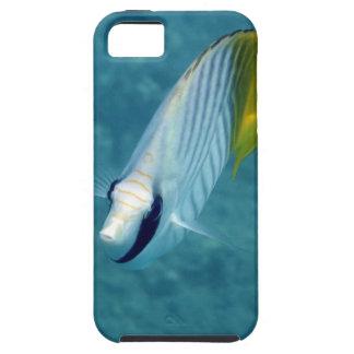 Pescados tropicales caso del iPhone de Maui, iPhone 5 Case-Mate Fundas