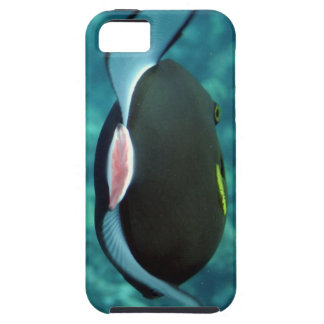 Pescados tropicales caso del iPhone de Maui, iPhone 5 Protectores