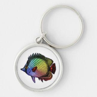 Pescados tropicales de la mariposa del arco iris llavero