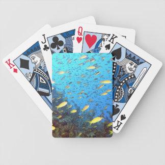 Pescados tropicales del filón barajas de cartas
