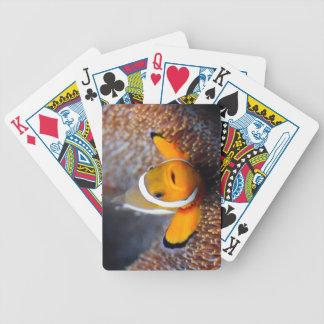 Pescados tropicales del filón - Clownfish Baraja Cartas De Poker