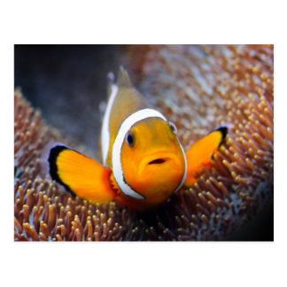 Pescados tropicales del filón - Clownfish Tarjetas Postales