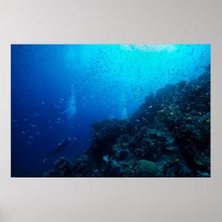 Pescados tropicales del mar de coral impresiones