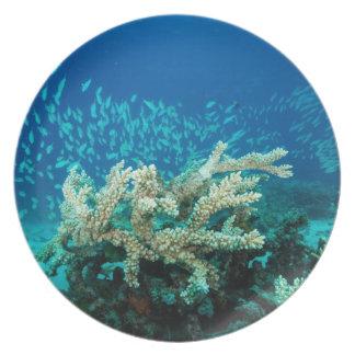 Pescados tropicales del mar de coral - placa de ce plato para fiesta