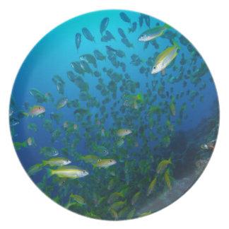 Pescados tropicales del mar de coral - placa de ce platos para fiestas