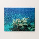 Pescados tropicales del rompecabezas del mar de co
