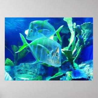 Pescados tropicales en azules hermosos y verdes póster
