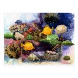 Pescados tropicales postales