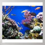 Pescados tropicales posters