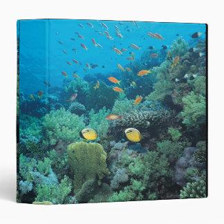 Pescados tropicales que nadan sobre el filón