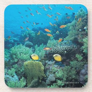Pescados tropicales que nadan sobre el filón posavaso