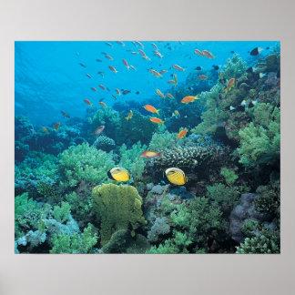 Pescados tropicales que nadan sobre el filón póster