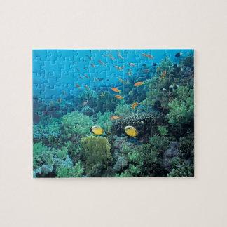Pescados tropicales que nadan sobre el filón puzzles con fotos