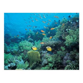 Pescados tropicales que nadan sobre el filón tarjeta postal