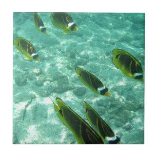 Pescados tropicales subacuáticos azulejo cuadrado pequeño