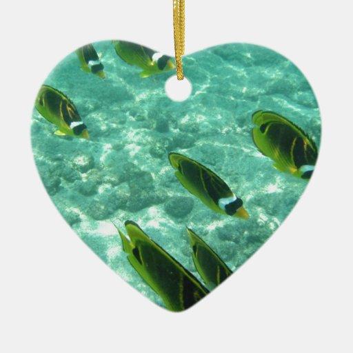 Pescados tropicales subacuáticos adorno de reyes