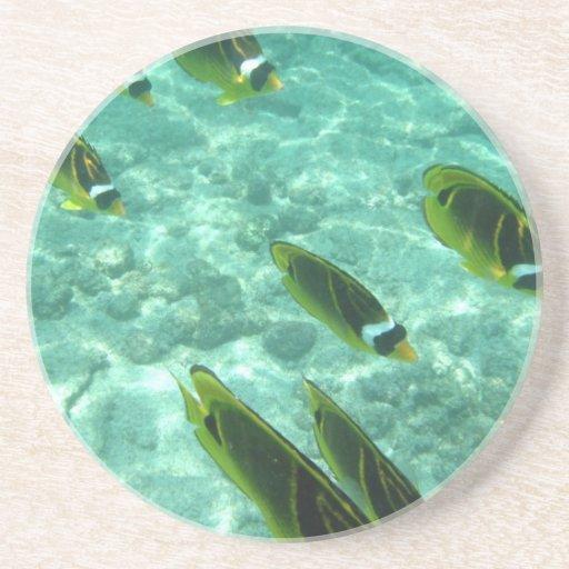 Pescados tropicales subacuáticos posavasos personalizados