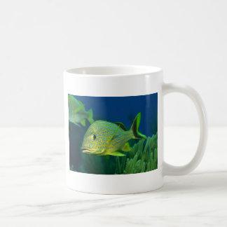 Pescados tropicales taza