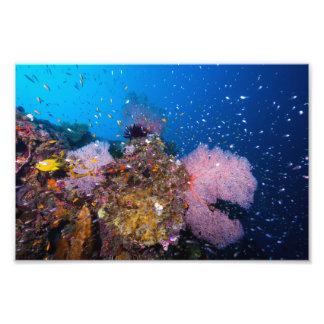 Pescados tropicales y fans coralinas fotografías