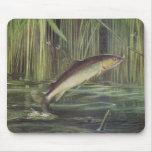 Pescados - trucha de Brown - trutta del Salmo Alfombrilla De Ratones