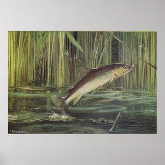 Pescados - trucha de Brown - trutta del Salmo Posters
